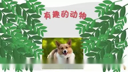 部编版二年级语文上册《口语交际:有趣的动物》浙江省优质课-2