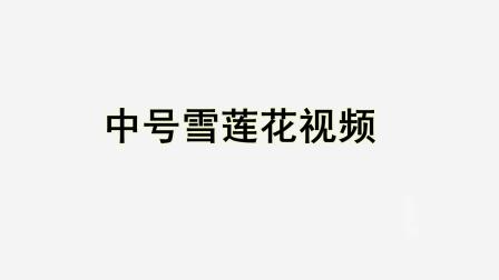 中号雪莲花视频教程 DIY串珠玫瑰花视频教程 手工编制玫瑰花视频