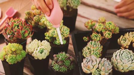云南直髮mumuhome多肉植物组合盆栽精品大老桩套餐盆栽不含花盆
