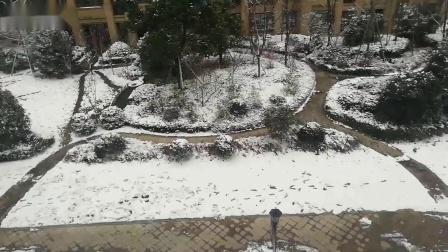 【冻芝士蛋糕】雪舞纷飞,芝士相随~樱花&雪~