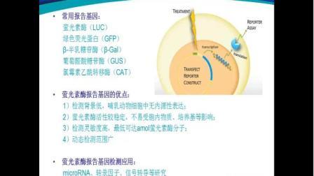 网络讲堂:如何使用酶标仪化学发光功能检测细胞活性及萤光素酶报告基因