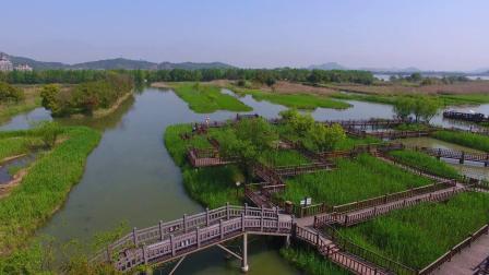 德清下渚湖国家湿地公园-大鹿摄制