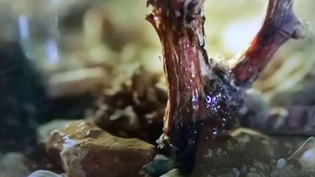 长城天赋葡萄酒 中国航天事业合作伙伴 15秒广告
