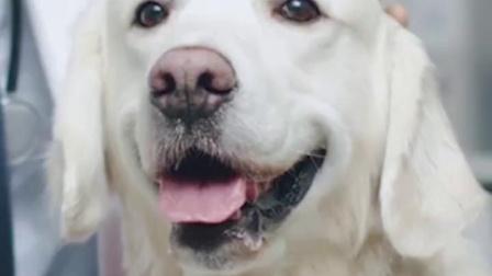 凯锐思 宠物狗狗训练奖励零食补钙火腿肠香肠泰迪金毛食品大礼包