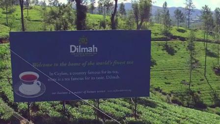 Dilmah迪尔玛蓝莓香草味红茶20袋整箱12盒锡兰红茶叶袋泡茶水果茶