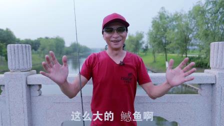 老虎路亚游钓中国泰州里下河地区鱤鱼2019 排骨老虎