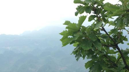 欢迎来到贵州娘娘山