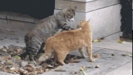 猫咪摔跤比赛