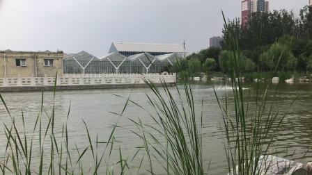 绿鲨,公园娱乐