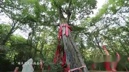 [湖北旅游](52)神农架大九湖国家湿地公园