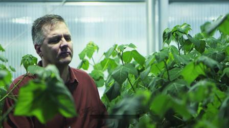 Sequencing Complex Plant Genomes at Texas A&M Agrilife - CHS