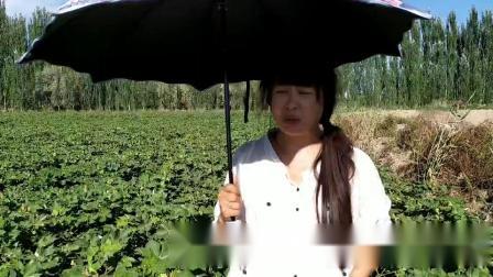 正达农业集团库车县棉花区看美女代理商是如何评价正达产品的
