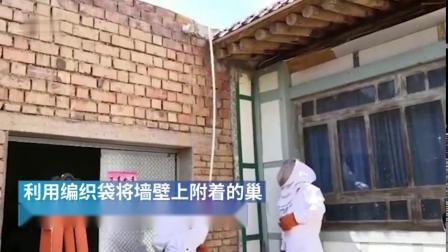 甘肃:8处马蜂窝长期霸占农户院子,消防1小时全烧完
