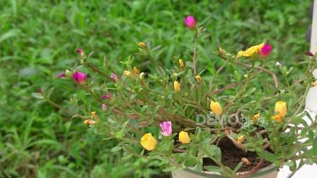 f64 2K画质姹紫嫣红大自然野外鲜花盛开花朵绽放实拍视频素材