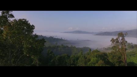 法国娇兰御廷兰花生态保护园区