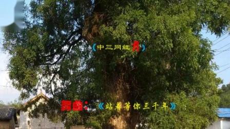沁水县坪头村姐妹舞蹈队(中三网红舞)《站着等你三千年》