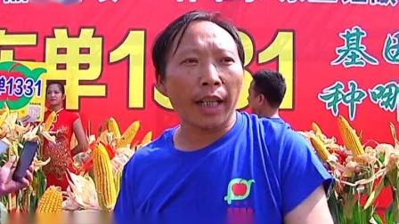 东单1331 :大旱之年保丰收的玉米品种
