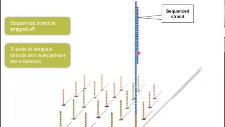 Illumina在线技术研讨会 - Illumina 边合成边测序介绍-20190814