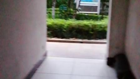 冠泰地产电梯间12