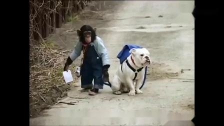 四川方言:猩猩给狗狗烤湿照片,差点燃起了结局笑安逸