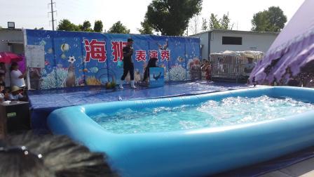 义乌·海狮表演秀