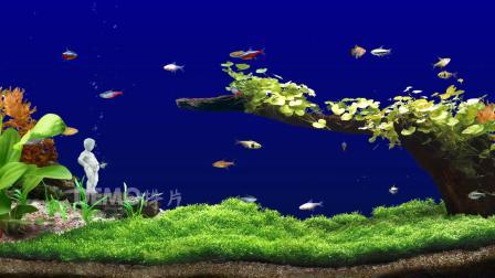 f517 2K画质梦幻海底世界海洋水族馆清澈水底鱼儿游动烧烤店咖啡厅大屏幕LED视频素材