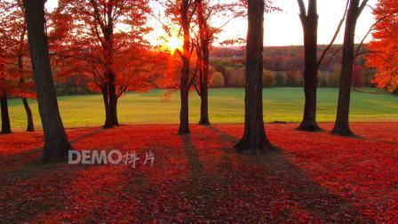 f688 秋天金色枫叶枫树金秋大自然景色森林空镜头视频素材