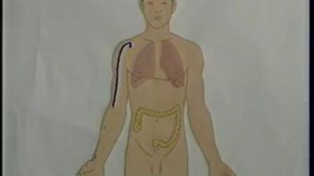 人体常用穴位取穴法-标清