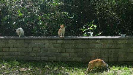 上海·午后给小区里的流浪猫喂食和水