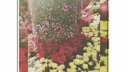 潍坊市植物园杨老师花棍表演