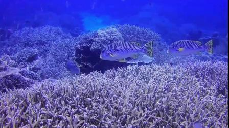 君晓天云潜水手机保护壳mate20pro华为P30PRO三星水下拍照防水保护套深潜苹果