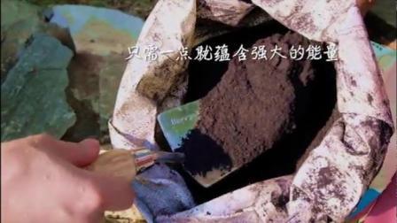 君晓天云基地直髮花信风基质伴侣多肉盆栽绿植花卉营养土牛粪微生物有机肥