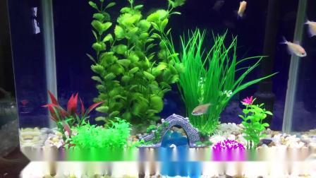 君晓天云小鱼缸造景套餐仿真水草背景假山海螺摆件水族箱植物布景鹅卵石