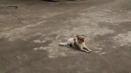 星日月VLOG01:龙猫在无锡老家养的一只狗^_^