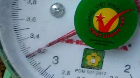 1072让重3两的西贡小嫩鸡6.2斤