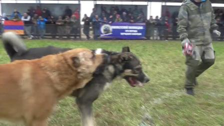 泰山猎狼犬---戴悍-超级联赛晋级