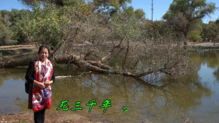 西北旅游--古老的额济纳旗胡杨林