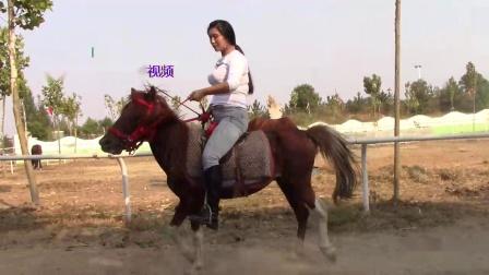 国产骑马42
