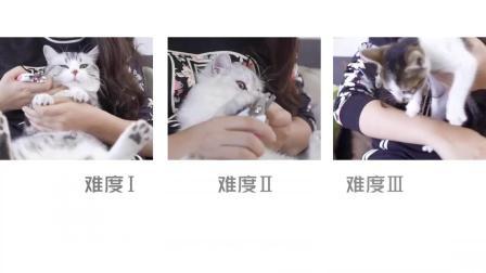 给猫咪剪指甲真的有这么难么?……是的