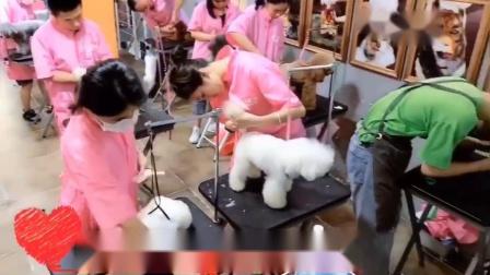 宠物美容师培训,零基础免费赠送宠物鲜食烘焙课,包教会