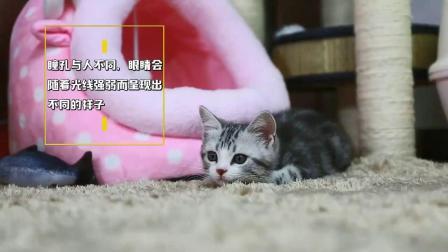 猫咪身体的5个小秘密