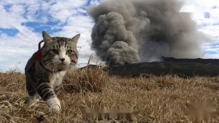 为了与主人环游日本,猫咪苦练游泳,旅行就是如此简单