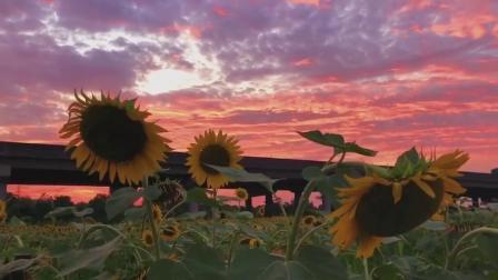 看过一千种关于秋天的句子,都不及这一刻难得的落日晚霞和恰好吹来的微风