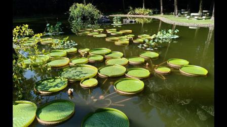 西双版纳•野象谷与热带植物园