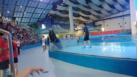 合肥海洋世界    海豚表演