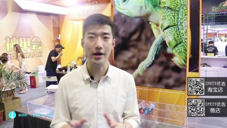 【IPETY|带你逛】2019上海龟谷展(六)蛋龟半水龟、节肢类、鹦鹉等应有尽有