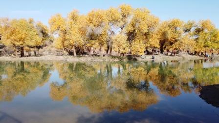 航拍胡杨林秋天的景色