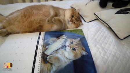 主人把猫的照片做成日历,拿给猫看,猫一脸淡定不愧是见过世面的