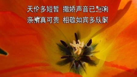《野花没有家花香》基督教歌曲