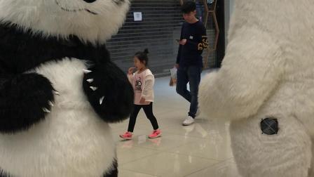 大熊猫 北极熊表演